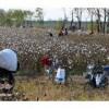 采棉机价格采棉花机石河子二手采棉机7660凯斯采棉机