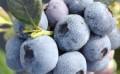 耐特菲姆专业从事水肥一体化设备,数字农业技术的生产经营,深