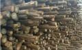 恒之韵直供专业郑州杉木杆批发厂家货源,并提供全面的杉木杆产