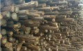 恒昌木业郑州杉木杆批发厂家,高效可信赖
