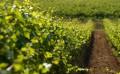 耐特菲姆,广州,农业科技有限公司服务优良,提供服务