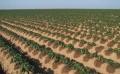 供应专业的水肥一体化系统,水肥一体化系统新报价