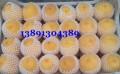 蜜毛桃价格-陕西纸袋蜜毛桃产地上市价格