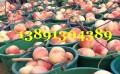 早熟毛桃价格-陕西万亩620毛桃,新颖毛桃沙红桃产地上市价格