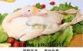 供应广西贺州新鲜冻品鸭生产厂家批发报价