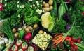 具有口碑的源生蔬菜配送服务推荐,办公室食堂食材配送招标