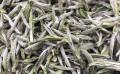 福鼎白茶白毫银针属于什么茶