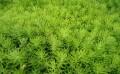 佛甲草价格|哪里有提供品质高的佛甲草