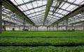 智能温室大棚建设如何实现自动控制?