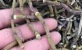 石斛陪购带路,铁皮枫斗优质货源对接